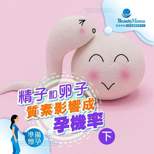 《精子和卵子質素影響成孕機率(下)》